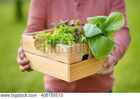 Close Up Photo Of Male Gardener Holding Wooden Crate With Fresh Organic Greens For Sale From Farm. H