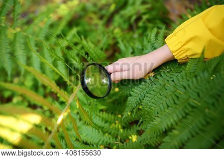 Child Is Exploring Nature With Magnifying Glass. Little Boy Is Looking On Leaf Of Fern With Magnifie