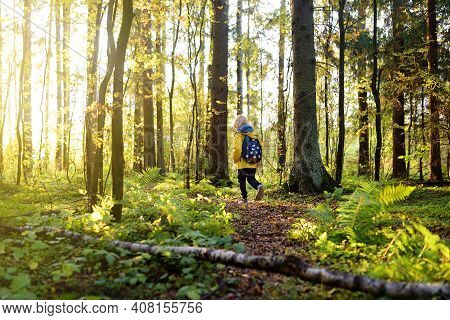 School Child With Backpack Is Hiking And Exploring Nature In The Forest. Little Boy Travel In The Su