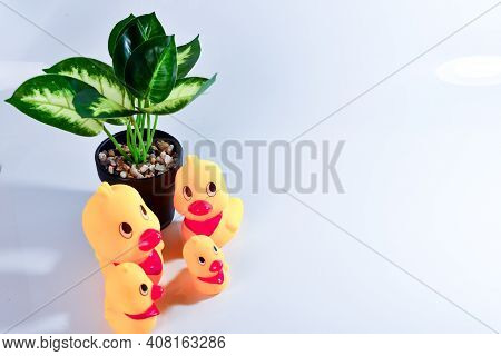 Mother Duck And Ducklings. Duck Mother Animal And Family Duckling.the Happines Family.