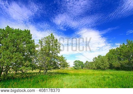 Meadow And Forest Scenery Of The Sage Creek Basin In Badlands National Park South Dakota