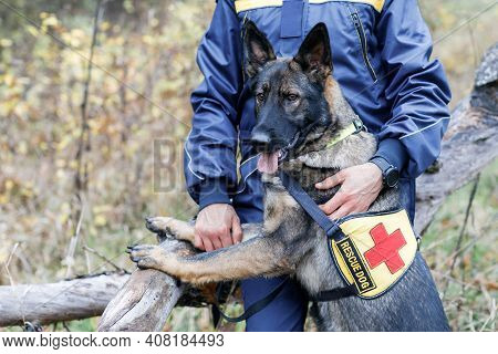 A Male Rescuer Holds A Dog On A Leash. Rescue Dog In Search And Forest
