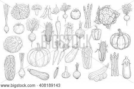 Vegetables Sketch Icons, Farm Food Harvest Veggies, Vector Hand Drawn. Vegetables, Vegetarian Food,