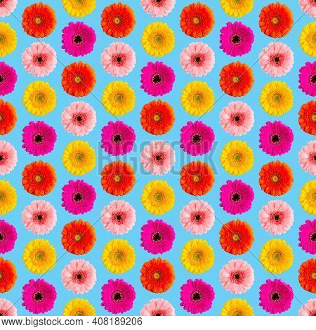 Seamless Pattern Of Colorful Gerbera On A Blue. Germini Photo Converted Into A Seamless Pattern
