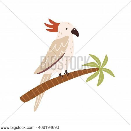 Cockatoo Bird Sitting On Palm Tree Trunk. Tropical Australian Parrot With Red Crest And Long Tail. C
