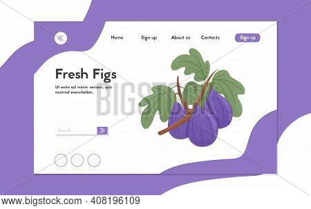 Ripe Fresh Figs Landing Page Template. Sweet Figs Fruit On Branch With Leaves Vector Hand Drawn Webs