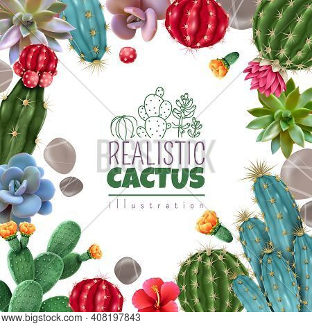 Blooming Cacti And Popular Succulents Varieties Easy Care Decorative Indoor Plants Realistic Colorfu
