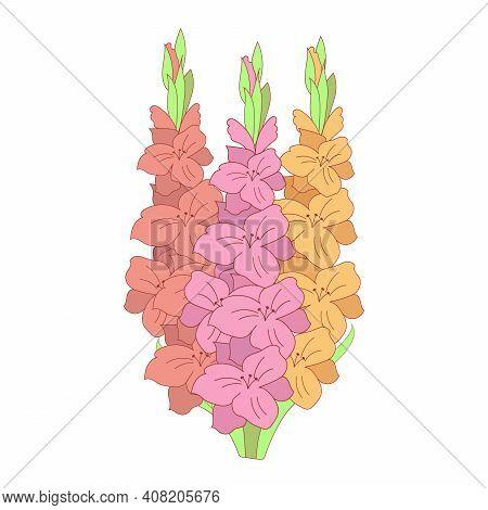 Gladiolus Flowers Vector Illustration For Design. Tropical Flowers