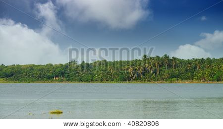 Lake With A Tropical Forest