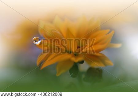 Beautiful Nature Background.Floral Art Design.Abstract Macro Photography.Gerbera Daisy Flower.Pastel Flowers.Yellow Background.Creative Artistic Wallpaper.Wedding Invitation.Celebration,love.Close up View.Happy Holidays.Golden Color.Copy Space.Water Drop.
