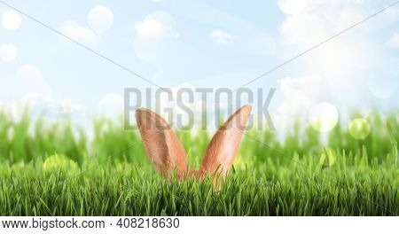 Cute Easter Bunny Hiding In Green Grass Outdoors, Space For Text. Banner Design