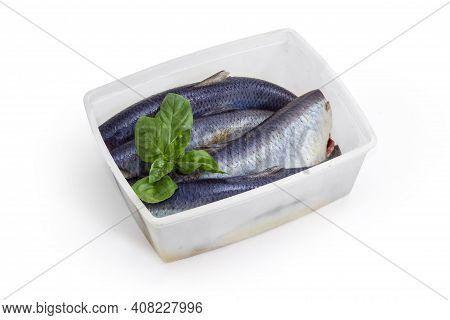 Several Pickled Mild Salted Atlantic Herring Without Heads In Brine  And Fresh Basil Twig In Plastic