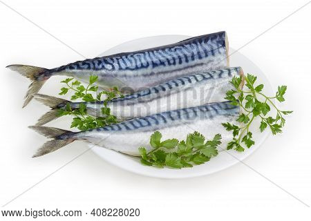 Several Pickled Mild Salted Atlantic Mackerel Without Heads And Twigs Of Fresh Greens On Dish On A W