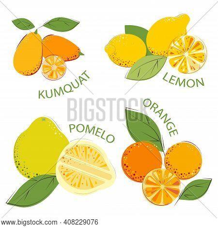 Set Of Citrus Fruits. Ripe Juice Vitamin Fruits: Kumquat, Pomelo, Lemon, Oranges.