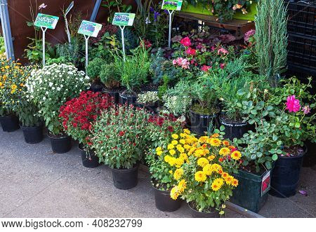 Samara, Russia - October 8, 2016: Sale Of Seedlings Of Decorative Flowers At The Farmers Market