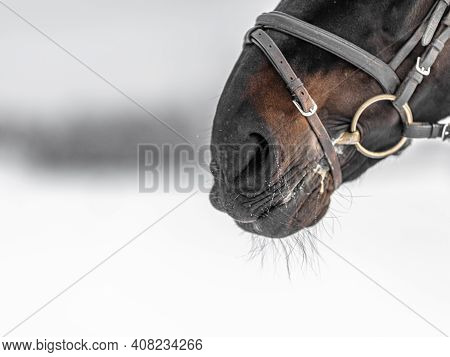 Frost On The Nose Of A Horse, Close-up, Horse In The Paddock In Winter. High Quality Photo