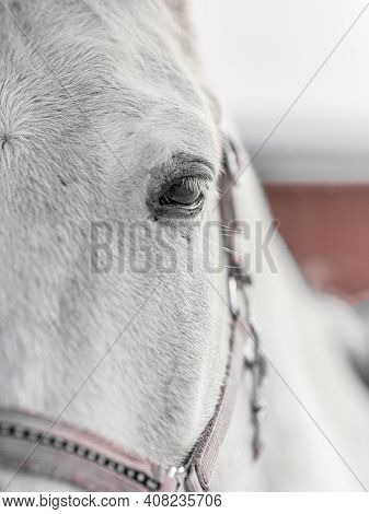 Horse Eye, Close-up, Horse In Paddock In Winter. High Quality Photo