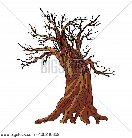 An Old Dry Tree With Long Bare Branches Without Leaves Isolated On A White Background. Vector Illust