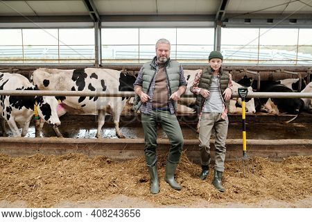 Mature man and teenage boy in workwear standing by large paddock with herd of milk cows in farm and preparing fresh feed for livestock