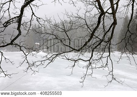 tree branches over a frozen lake in winter, Synevyr lake in Ukraine