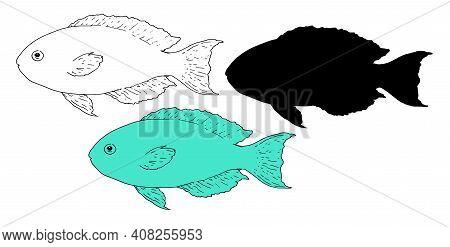 Scarus Rubroviolaceus Retro Sketch Sea Fish, Great Design For Any Purposes.vector Set Of Sea Fish Sc