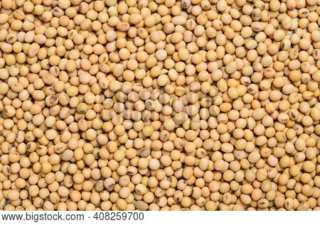 Close Up Dry Soybean Seeds Texture Background