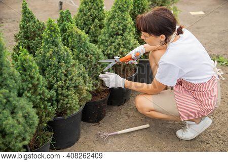 Worker Use Secateurs Cutting Autumn Pruning Conifer Shrubs Garden Shears, Trim Tidy Shrub