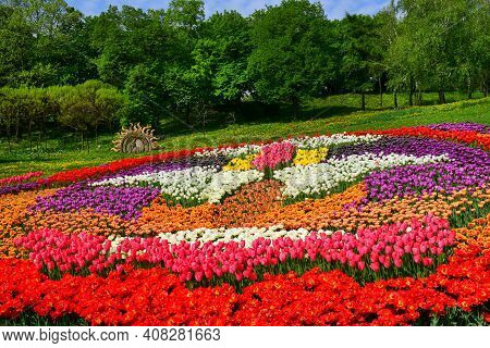 Blooming Tulips. Variety Of Tulips. Tulips Of Different Colors And Varieties. Beautiful Multicolored