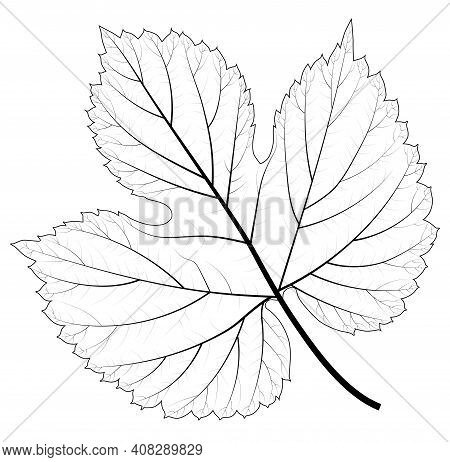 Skeleton Of Abstract Leaf. Isolated Vector Illustration For Your Card, Invitation And Other Decor De