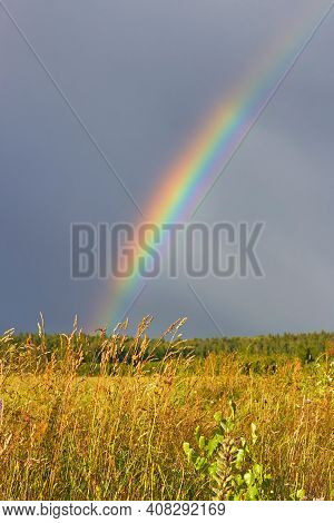 Rainbow Over A Wheat Field. Flying Down The Field Of Ripe Crops After The Rain And A Colorful Rainbo