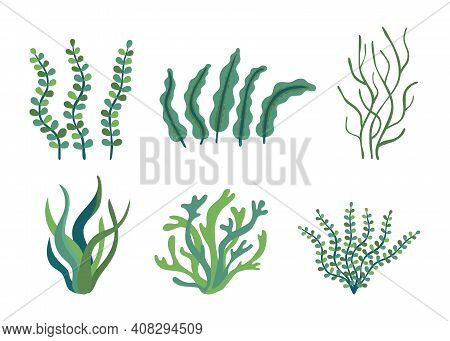 Set Of Different Underwater Sea Plants And Green Algae For Food. Edible Seaweed And Leaves. Plants O