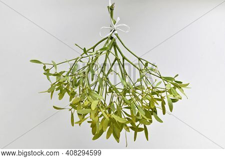Branch Of Mistletoe With Ribbon On White Background
