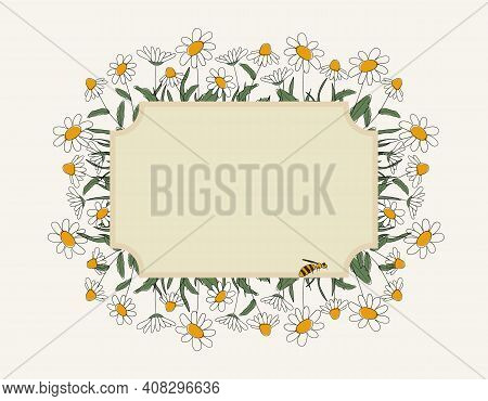 Seasonal Spring Hand Drawn Frame Vector Background.summer Decorative Box Or Border With Daisies, Cut