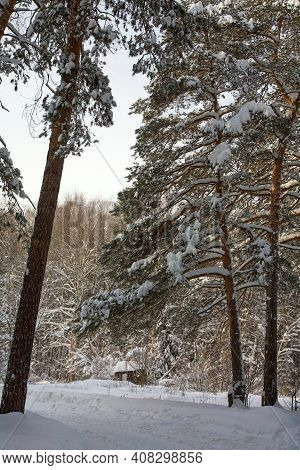 Winter Road In A Pine Forest In February