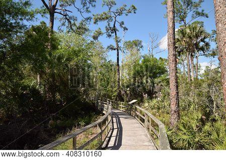Nature Walk Though The Florida Everglades Native Plant Habitat