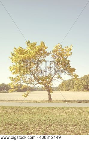 Color Toned Picture Of A Lonely Tree, Color Toning Applied.