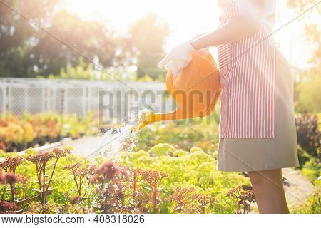 Happy Gardener Woman In Apron Watering Garden. Concept Summer Hobby
