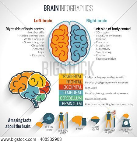 Brain Structure Left Analytical And Right Creative Hemispheres Infographics Set Vector Illustration
