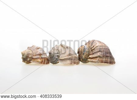 Seashells On A White Background . An Article About Seashells. Vacation At The Sea. Shopping By The S