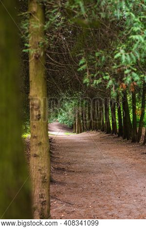 Tree Alley In A Botanical Garden Of The City Of Minsk, Belarus. Spring In Minsk. Blooming Lilacs And