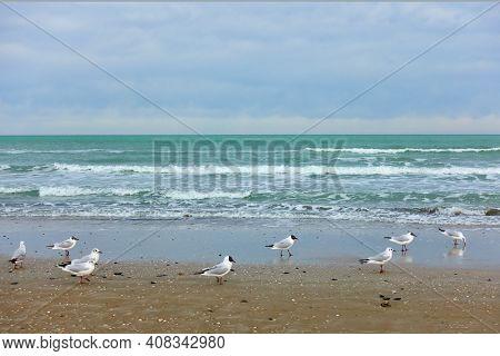 The Adriatic Sea and gulls on the sandy beach in Rimini, Italy. Italian landscape - seascape, resort in the off season