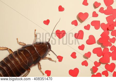 Valentine's Day Promotion Name Roach - Quit Bugging Me. Cockroach And Small Paper Hearts On Beige Ba