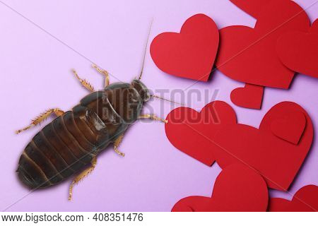 Valentine's Day Promotion Name Roach - Quit Bugging Me. Cockroach And Paper Hearts On Lilac Backgrou