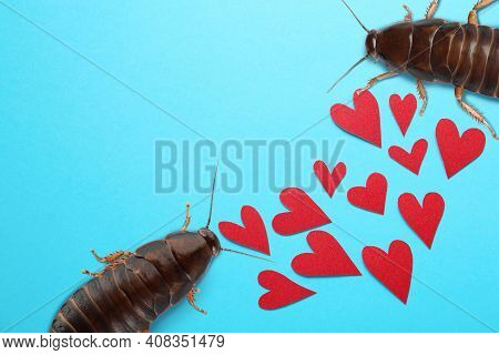 Valentine's Day Promotion Name Roach - Quit Bugging Me. Cockroaches And Red Paper Hearts On Light Bl