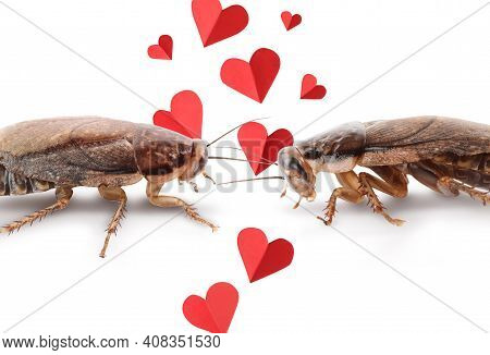 Valentine's Day Promotion Name Roach - Quit Bugging Me. Cockroaches And Small Paper Hearts On White