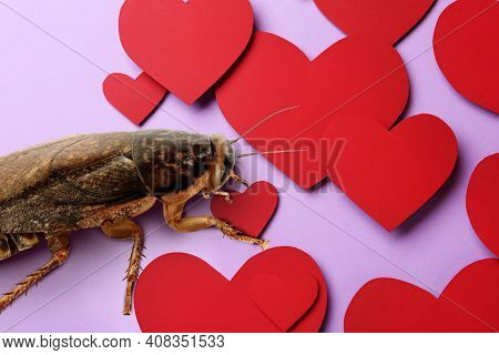 Valentine's Day Promotion Name Roach - Quit Bugging Me. Cockroach And Red Paper Hearts On Lilac Back