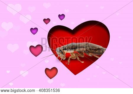 Valentine's Day Promotion Name Roach - Quit Bugging Me. Cockroach On Red Background, View Through Cu