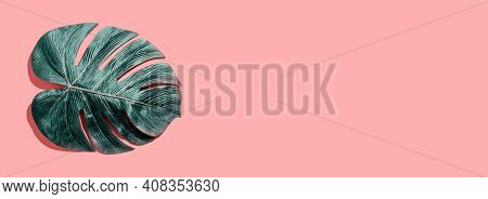 Tropical Plant Monstera Leaf Overhead View Flat Lay Tropical Plant Monstera Leaf Overhead View Flat