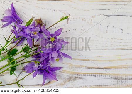 Blue Columbine Flowers On A White Wooden Background. Top View, Copy Space