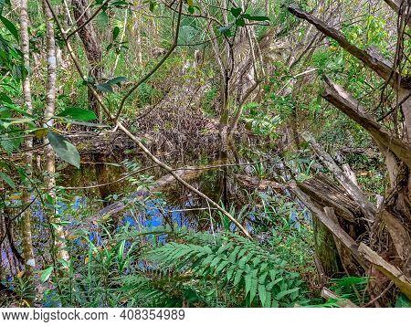 South Florida Cypress Swamp Wetland